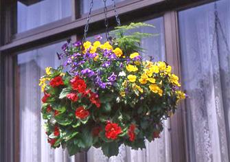 【楽天市場】ハンギング器(吊・掛):花苗園芸店 …